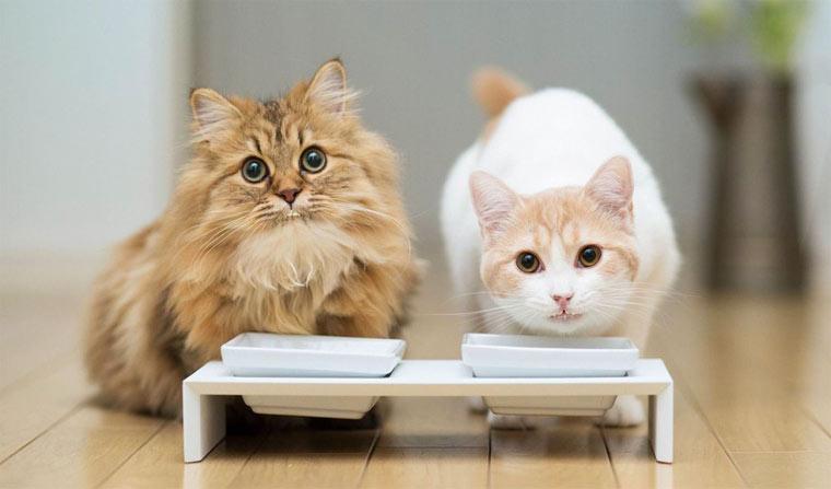 Топ 10 лучшие корма для кошек