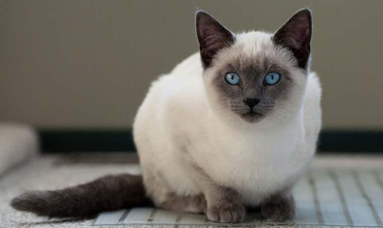 Топ 10 самых умных кошек в мире