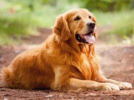 Лучшие породы собак для семьи
