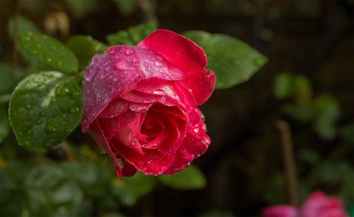 Фото самого красивого цветка в мире