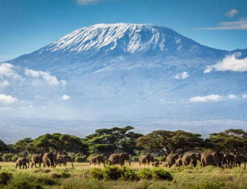 Самые большие вулканы в мире