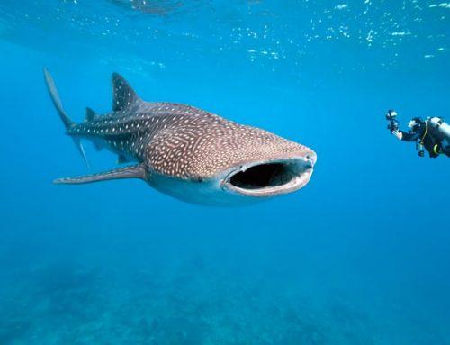 Самые большие рыбы в мире