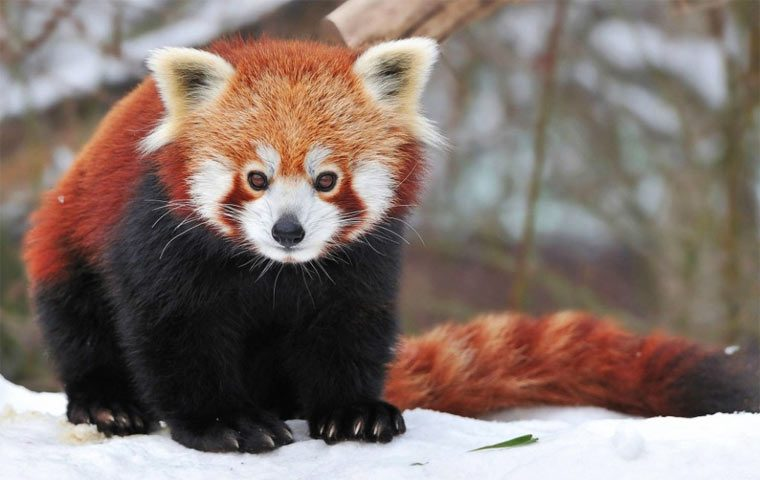 Очень красивое животное