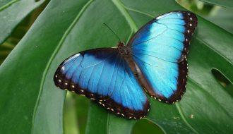 Топ 10 самых красивых бабочек в мире