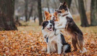 Топ 10 самые умные породы собак